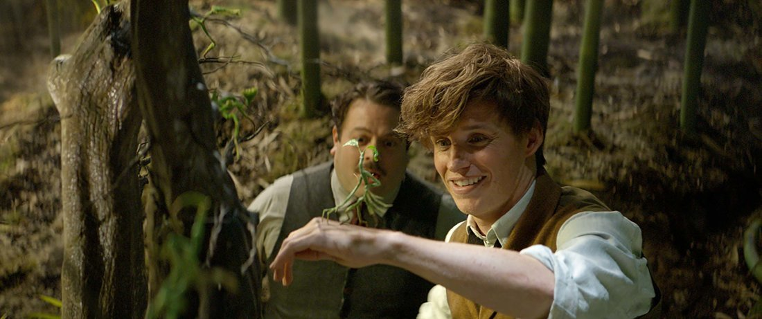 Newt and Jacob with the Bowtruckle
